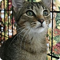 Adopt A Pet :: Janice - Frederick, MD