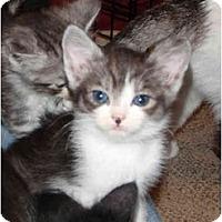Adopt A Pet :: Diego - Modesto, CA