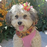 Adopt A Pet :: **FIONA** - Stockton, CA