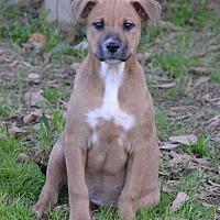 Shepherd (Unknown Type) Dog for adoption in Jackson, Mississippi - Winslow Arizona
