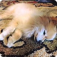 Adopt A Pet :: LUCKY - Waterbury, CT