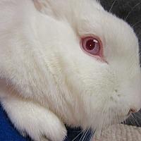 Adopt A Pet :: Pinkerton - Newport, DE