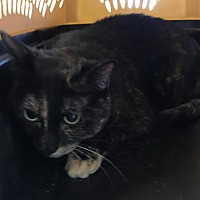 Adopt A Pet :: Sasha - Jupiter, FL