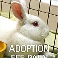 Adopt A Pet :: Gabriella - Novato, CA