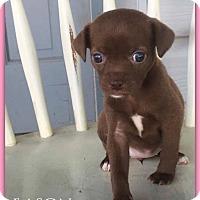 Adopt A Pet :: Eason - DeForest, WI