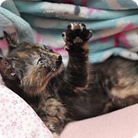 Adopt A Pet :: Buttercup - Sparta, NJ