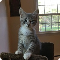 Adopt A Pet :: Peanut - Philadelphia, PA
