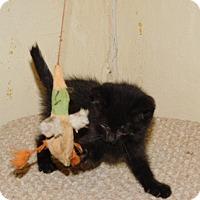 Adopt A Pet :: IDLI - Millerstown, PA