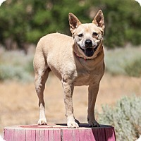 Adopt A Pet :: Cleo - Washoe Valley, NV