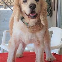 Adopt A Pet :: CHUMLEY - Toluca Lake, CA