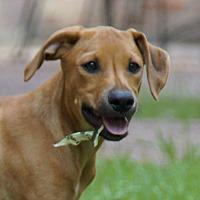 Adopt A Pet :: Stewie - Trenton, NJ