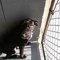 Adopt A Pet :: Scarr - Waycross, GA