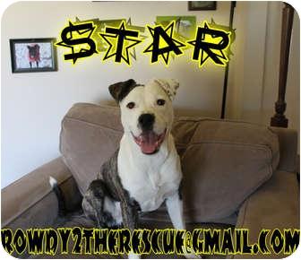 American Bulldog/Labrador Retriever Mix Dog for adoption in Columbia Station, Ohio - Star