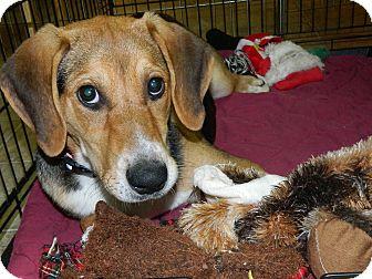 Beagle/Hound (Unknown Type) Mix Dog for adoption in Smithfield, North Carolina - Audrey