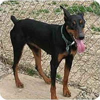 Adopt A Pet :: Darby--adopted! - New Richmond, OH