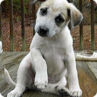 Adopt A Pet :: Terry R - Staunton, VA