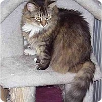 Adopt A Pet :: Tigger - Odenton, MD