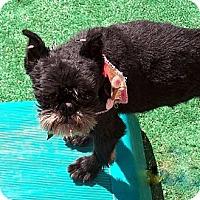 Adopt A Pet :: TAD in Marysville, WA - Salem, OR