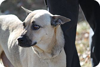 German Shepherd Dog Mix Dog for adoption in Littleton, Colorado - KENTUCKY
