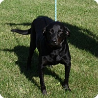 Adopt A Pet :: Pete - Lewisville, IN