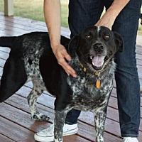 Adopt A Pet :: Courtesy  - Clyde - Clifton, TX