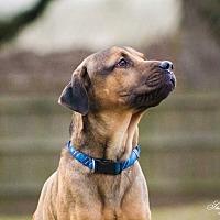Adopt A Pet :: Jethro - Lake Charles, LA