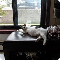 Adopt A Pet :: Susie *Waiting too Long* - Minneapolis, MN