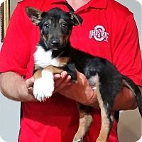 Adopt A Pet :: Toby - South Euclid, OH