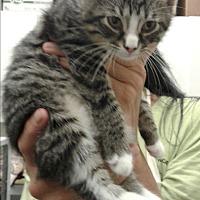 Adopt A Pet :: Calvin - Barnwell, SC