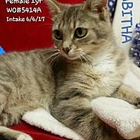 Adopt A Pet :: Tabitha - Fayetteville, WV