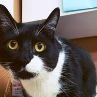 Adopt A Pet :: Rascal - Spokane, WA