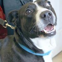 Adopt A Pet :: Dossy - Enterprise, AL