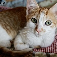 Adopt A Pet :: Twiggy - Polson, MT
