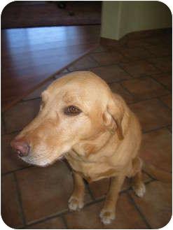 Labrador Retriever Mix Dog for adoption in Arenas Valley, New Mexico - Riley