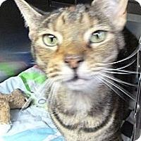 Adopt A Pet :: Lola - St. Petersburg, FL