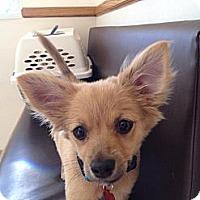 Adopt A Pet :: Ralphie - Davie, FL