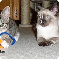 Adopt A Pet :: Parker - Portland, OR