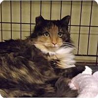 Adopt A Pet :: Gabby - Modesto, CA