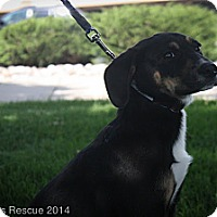 Adopt A Pet :: Independence - Broomfield, CO