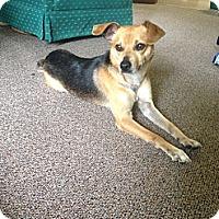 Adopt A Pet :: Hugh - Somers, CT