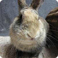 Adopt A Pet :: Shari - Newport, DE