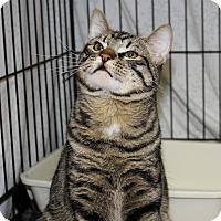 Adopt A Pet :: Calvin - Mission, BC