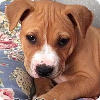 Adopt A Pet :: Wrigley - Cary, IL