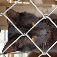 Adopt A Pet :: Loverboy - Tonopah, AZ