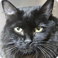 Adopt A Pet :: Belle - Sarasota, FL