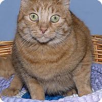 Adopt A Pet :: Simba - Gatineau, QC
