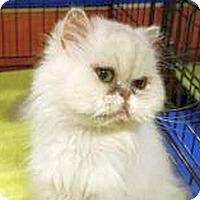 Adopt A Pet :: AIMEE - Powder Springs, GA