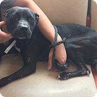 Adopt A Pet :: Nicole-URGENT! - Oak Ridge, NJ