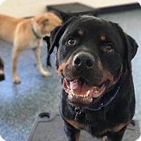 Adopt A Pet :: Artie - LITTLETON, CO