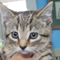 Adopt A Pet :: Linda - Robinson, IL